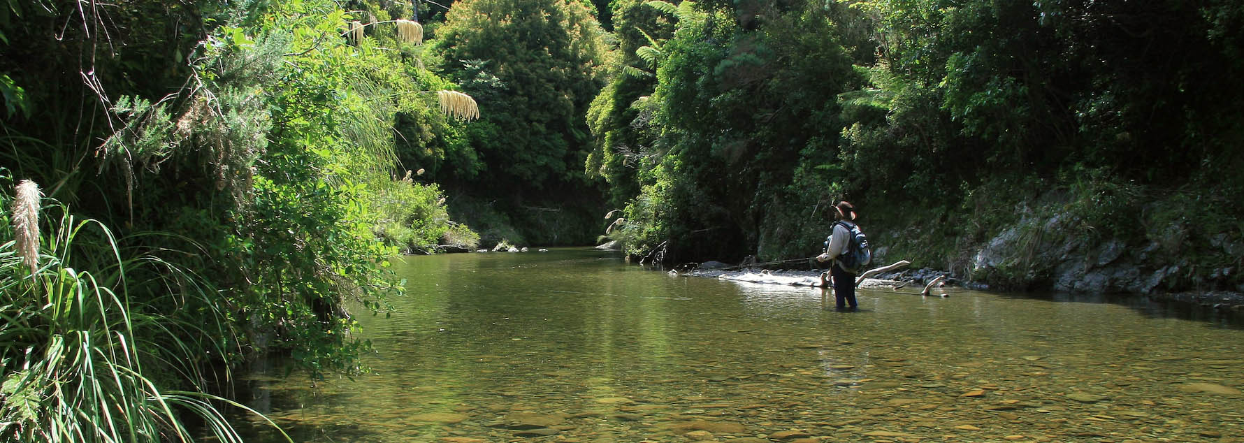 Fly fisherman fishing and walking ankle deep through a shallow and wide gin-clear backcountry pool, with bush clad surrounds, New Zealand