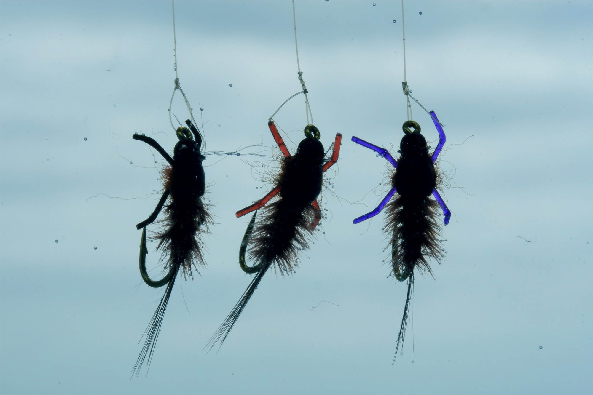 Three Jelly Leg Colly flies hanging suspended in water